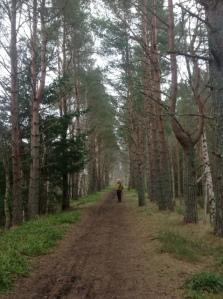 Dava Way trees.