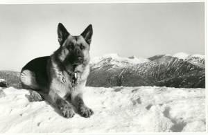 Teallach My dog a real Mountaineer.