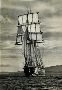 Captain Scott - from Fiana Wild blog