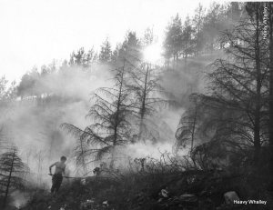 Forest Fires - in North Wales 1986