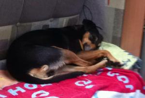 Penny the wonder Dog taking it easy. Photo G Morrision