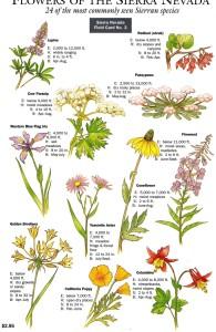 2008 Sierra Nevada Flowers 2