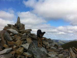 Penny on the Lurgh Mor Munros!