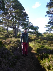 Setting of from Rothie murcus . Amongst the Scots Pines.