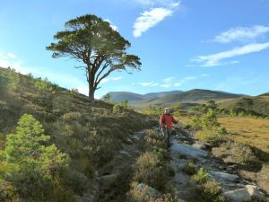 One of the I am alive trees in the Cairngorms when you reach this place you are nearly home?