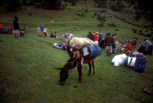 Mules and Porters