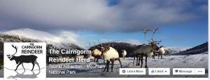 Facebook Cairngorm Reindeer