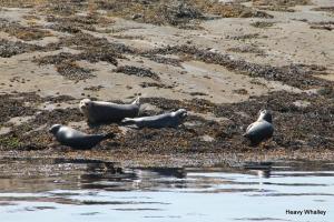 The seals!