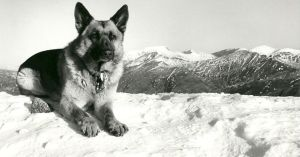 Teallach in his prime on the Mamores power and beauty and such a great nature miss you old boy.