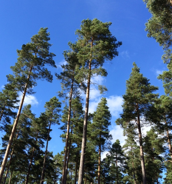 findhorn-trees